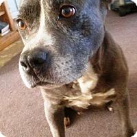 Adopt A Pet :: Rosette - Rancho Cucamonga, CA