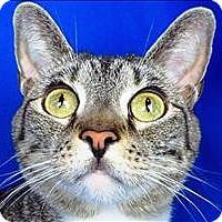 Adopt A Pet :: Zelda - Sherwood, OR