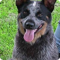 Adopt A Pet :: Ruckus - Texico, IL