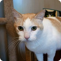 Adopt A Pet :: George - Kingston, WA