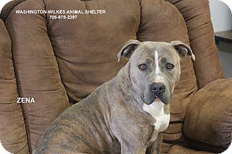 American Pit Bull Terrier Mix Dog for adoption in Washington, Georgia - Zena