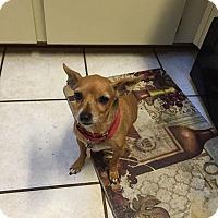 Adopt A Pet :: Gorda - Windermere, FL