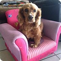 Adopt A Pet :: Camilo - San Diego, CA