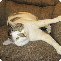 Adopt A Pet :: Tom - Mebane, NC