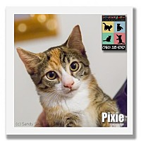 Adopt A Pet :: Pixie - Palm Desert, CA