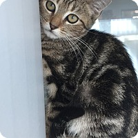 Adopt A Pet :: Austin - Prince George, VA