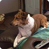 Adopt A Pet :: Buddy - Steelville, MO
