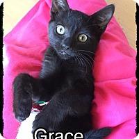 Adopt A Pet :: Grace - Brandon, FL