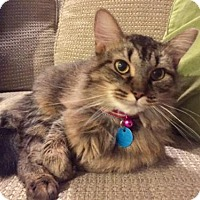 Adopt A Pet :: Hannah (Has Application) - Washington, DC