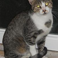 Adopt A Pet :: Spot - Fredericksburg, VA