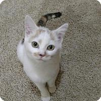 Adopt A Pet :: Winnie - Monroe, NC