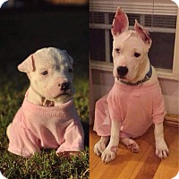 Adopt A Pet :: Lilith - DEAF - Anderson, SC