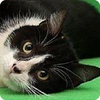 Adopt A Pet :: Peaches   URGENT - St. Charles, MO