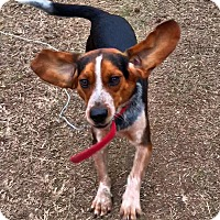 Adopt A Pet :: Robert Stitch - Olive Branch, MS