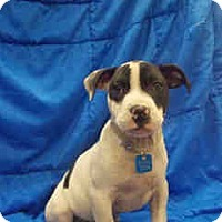 Adopt A Pet :: Levi ADOPTED!! - Antioch, IL