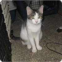 Adopt A Pet :: Maduca - Clay, NY