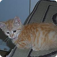 Adopt A Pet :: Alice - Tarboro, NC