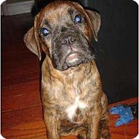Adopt A Pet :: Brandy - Lake Forest, CA