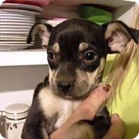 Adopt A Pet :: Michelle - Glendale, AZ