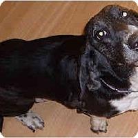 Adopt A Pet :: Marti - Phoenix, AZ