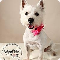Adopt A Pet :: Corky - Omaha, NE