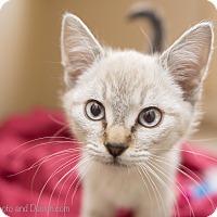Adopt A Pet :: Donny - Fountain Hills, AZ