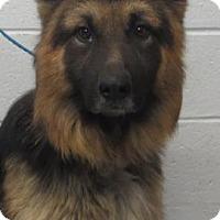 Adopt A Pet :: Neptune - Dacula, GA
