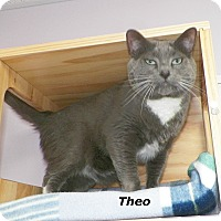 Adopt A Pet :: Theo - Dover, OH