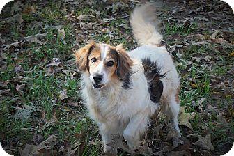 Border Collie Mix Dog for adoption in Ravenel, South Carolina - Scottie