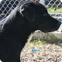 Adopt A Pet :: Astro - San Antonio, TX