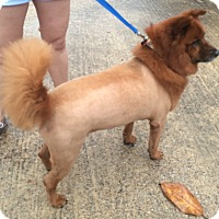 Adopt A Pet :: Lady - Natchitoches, LA