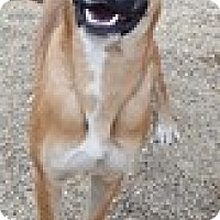 Adopt A Pet :: Harmony - Bloomington, IL