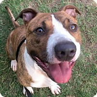 Adopt A Pet :: Hiram - Austin, TX
