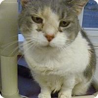 Adopt A Pet :: Patches - Hamburg, NY