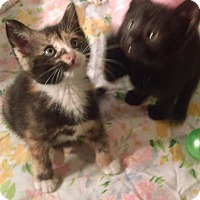 Adopt A Pet :: Brother n sister - Bayside, NY