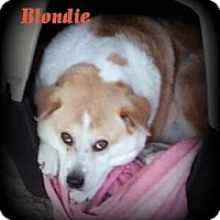 Adopt A Pet :: Blondie - Denver, NC
