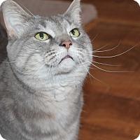 Adopt A Pet :: Isabelle - Naperville, IL