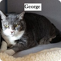 Adopt A Pet :: George - Lakewood, CO