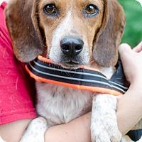 Adopt A Pet :: Toby - Greenwood, SC