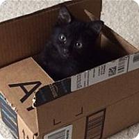 Adopt A Pet :: Oliver - Pleasanton, CA