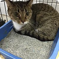 Adopt A Pet :: Darlin' - Paducah, KY