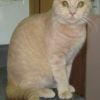 Adopt A Pet :: Sunkist - Powell, OH