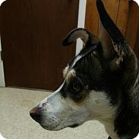 Adopt A Pet :: Shera - Cedar Crest, NM