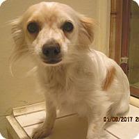 Adopt A Pet :: SADIE - La Mesa, CA