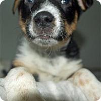 Adopt A Pet :: Romeo - Waupaca, WI
