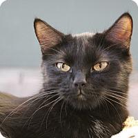 Adopt A Pet :: Capricorn - Sarasota, FL