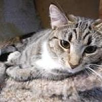 Adopt A Pet :: Willow - Port Richey, FL