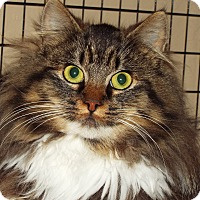 Adopt A Pet :: Cupid - Grants Pass, OR