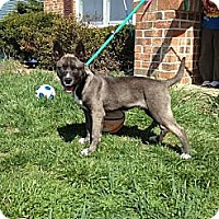 Adopt A Pet :: Garrett - South Jersey, NJ
