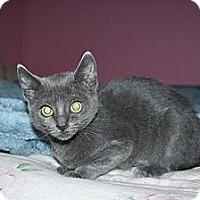Adopt A Pet :: Mya - Santa Rosa, CA